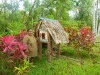 bai-for-spirits-not-a-bird-house