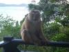 go-away-monkey