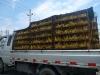 ducks-in-a-truck-2