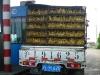 ducks-in-a-truck