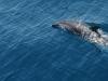 happier-dolphin