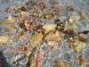 Dead Conch