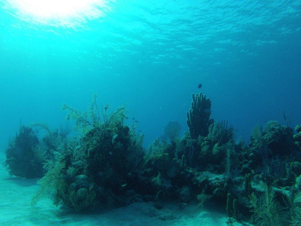 diving (1)