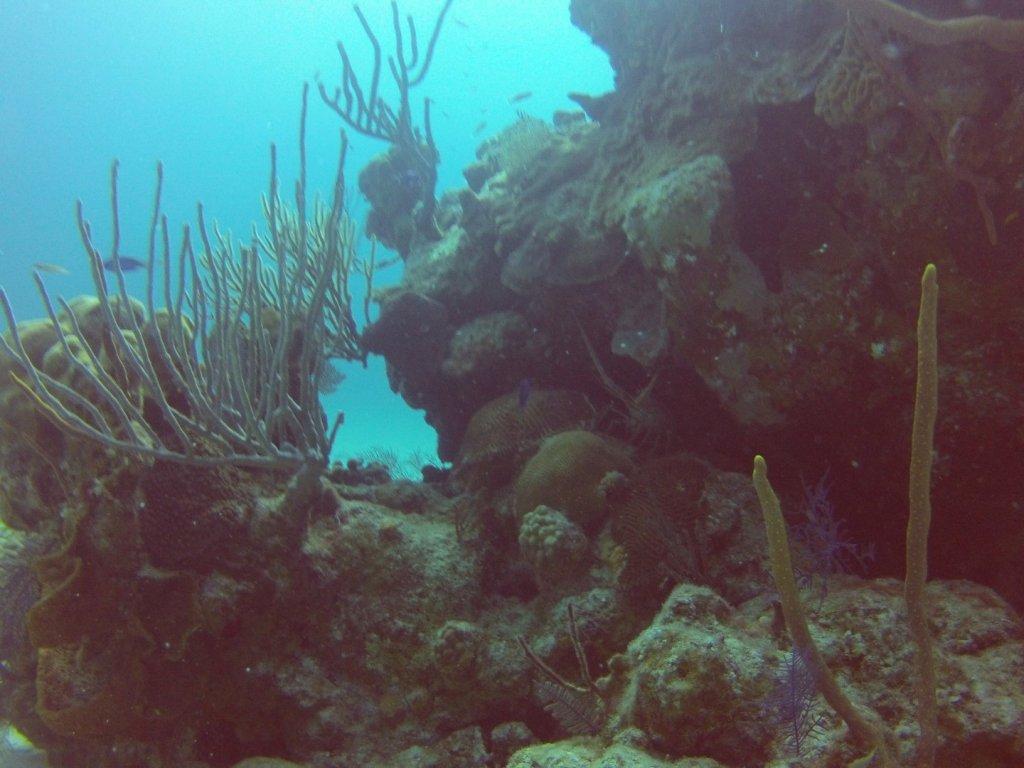 diving (17)