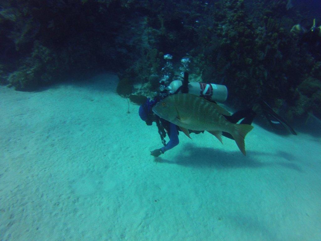 diving (24)
