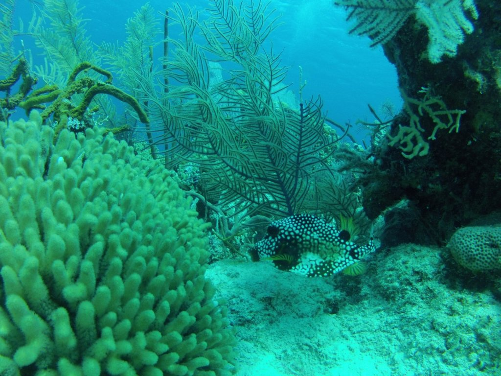 diving (33)