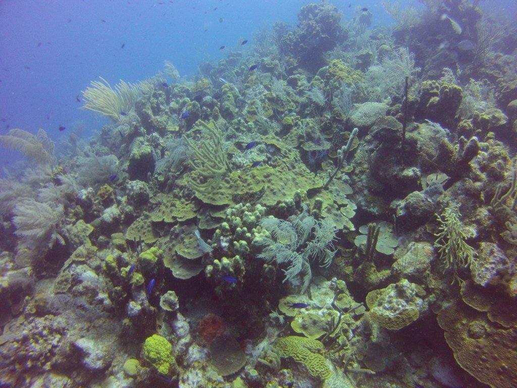 diving (36)