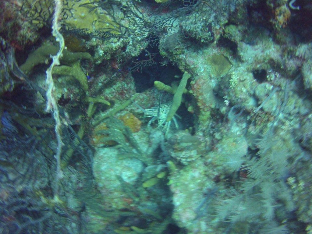 diving (38)