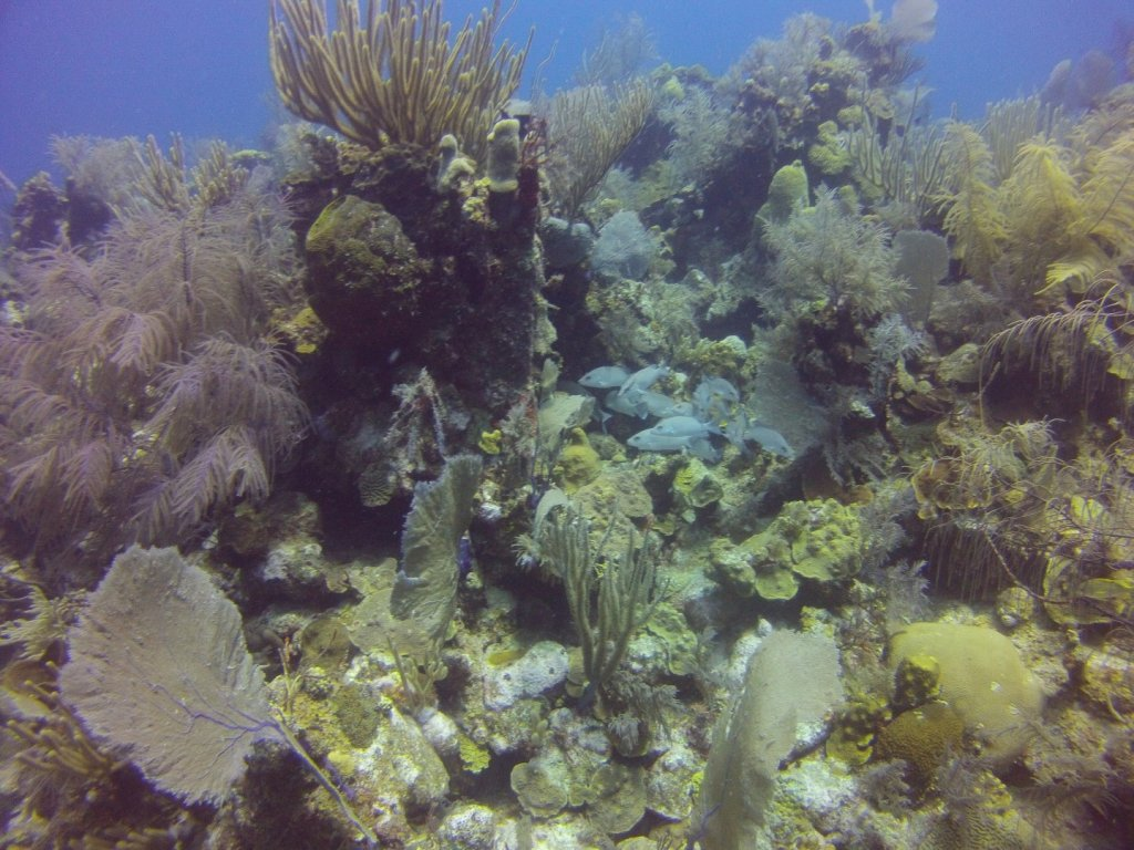 diving (41)