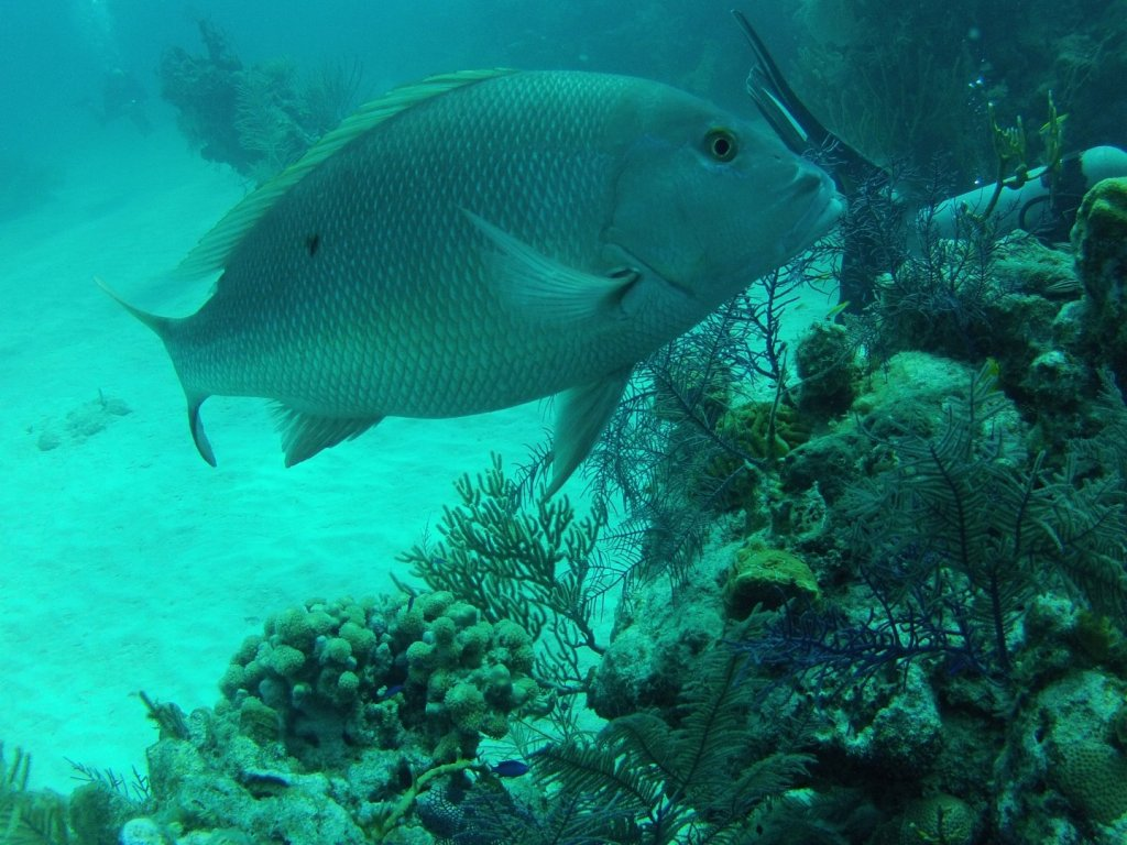 diving (46)