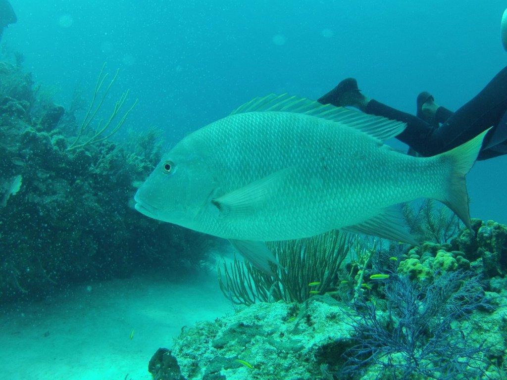 diving (47)