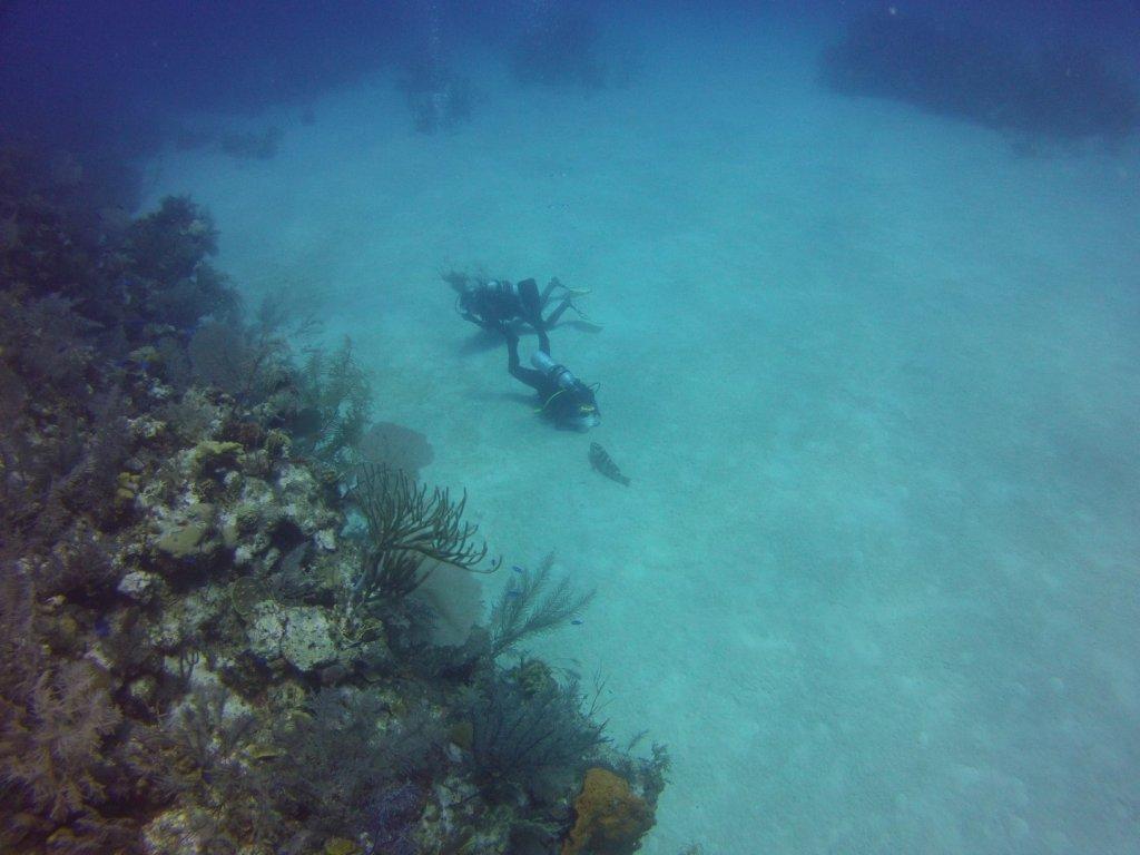 diving (49)