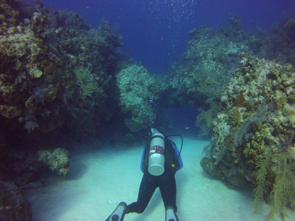 diving (5)