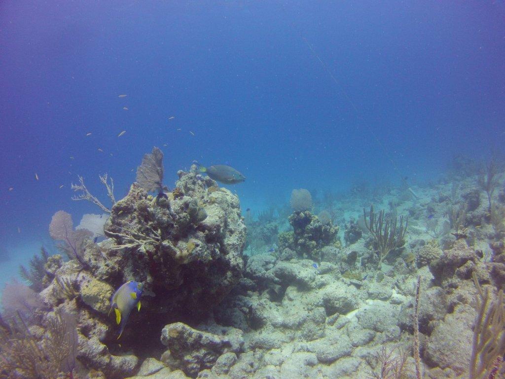 diving (52)
