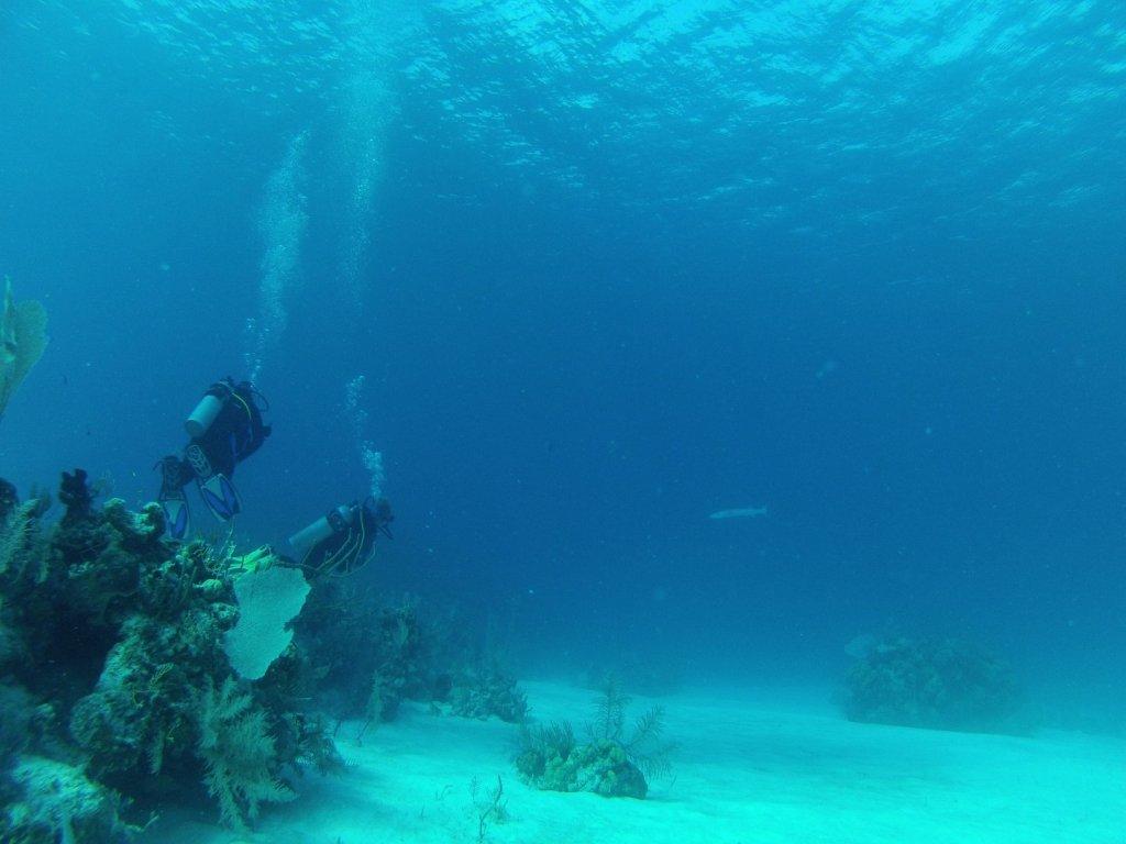 diving (60)
