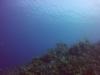 diving (18)