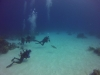 diving (26)