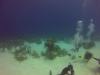 diving (28)