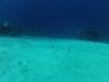 diving (3)