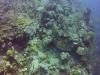 diving (35)