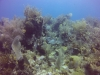diving (40)