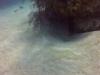 diving (42)