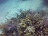 diving (48)