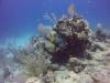 diving (53)