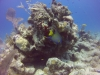 diving (54)
