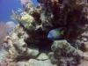 diving (55)