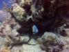 diving (56)