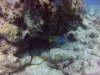 diving (57)