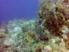 diving (58)