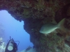 diving (6)