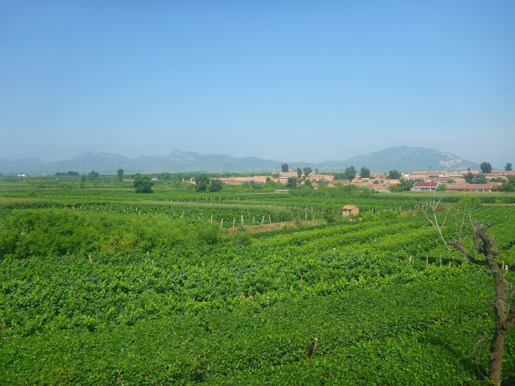 chinese-wine-country