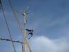 hey-bird-that-is-a-wind-turbine-not-another-bird