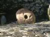 stone-money