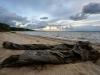 beach-0532