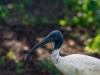 birds-1036