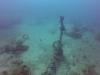 diving (14)