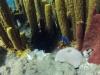 diving (7)