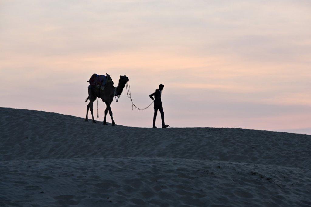 camels-9