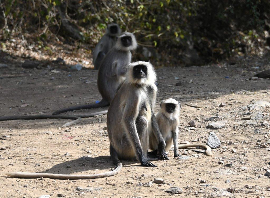 monkeys-3