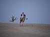 camels-1