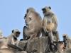 monkeys-1