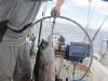 36-lbs-of-big-eye-tuna