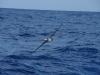 Sea Birds Keep Slick Company