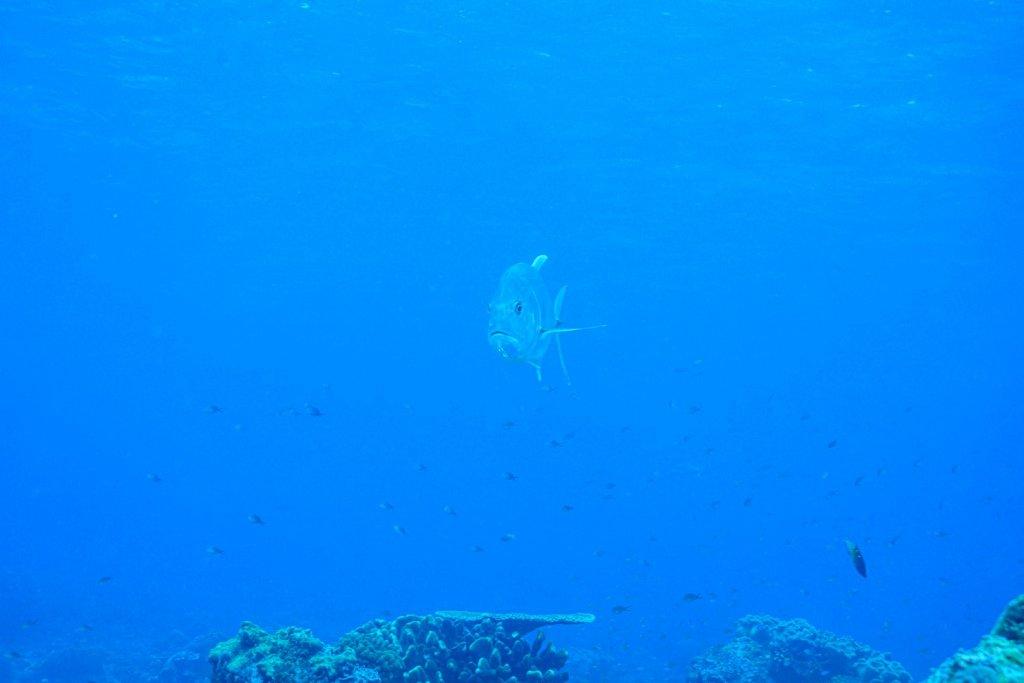raja-d-3-2012