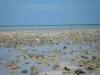 Conch Killing Fields