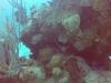 diving (19)